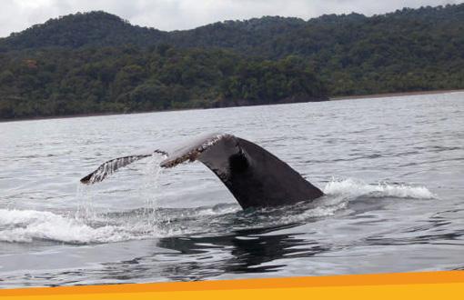 Walvissen spotten in Colombia