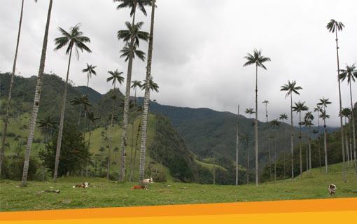 Cocora vallei